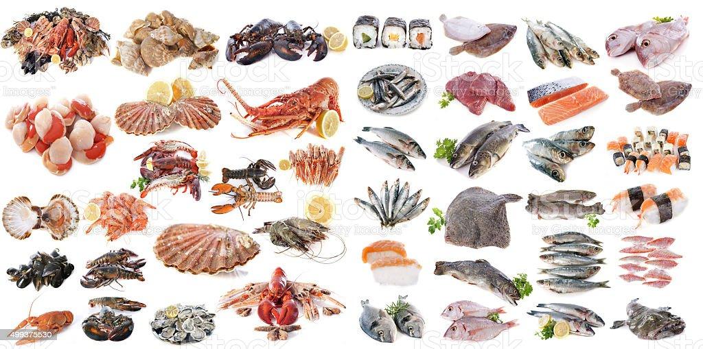 seafood fishs and shellfish stock photo