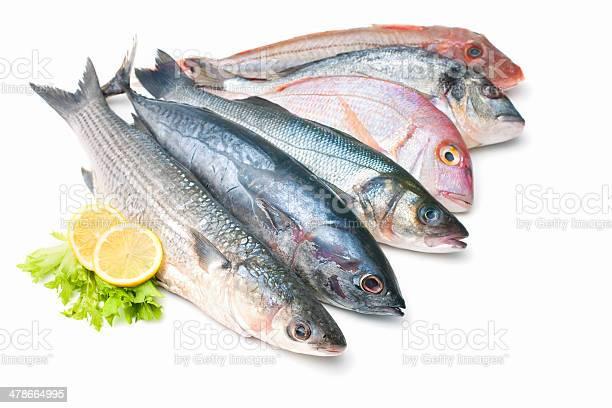 Pescados Y Mariscos Aislado Sobre Fondo Blanco Foto de stock y más banco de imágenes de Pez