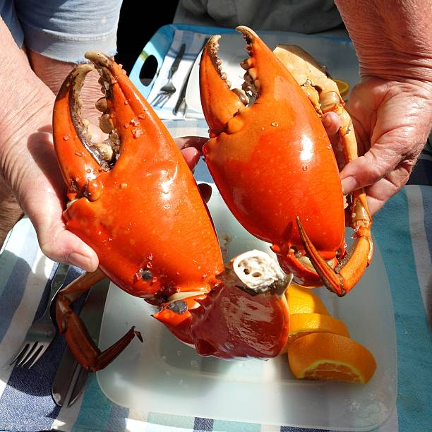 Seafood. Large Mud Crab Nippers. stock photo