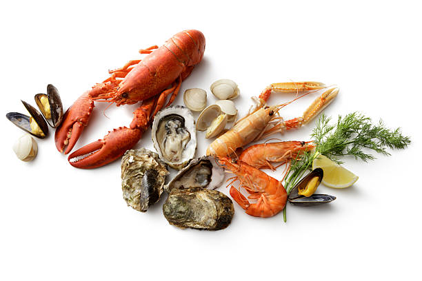 seafood: lobster, langoustine, shrimps, oyster, mussels and clams isolated - krustentiere stock-fotos und bilder