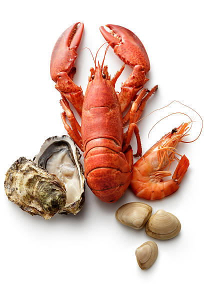 Seafood: Lobster, Shrimp, Oyster and Clams Isolated on White Background stock photo