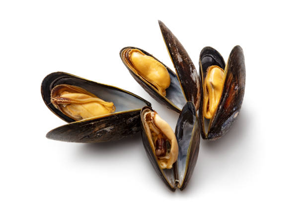 Seafood: Mussels Isolated on White Background stock photo