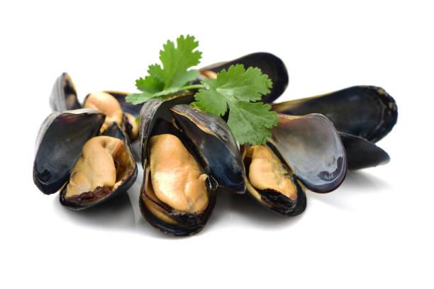 seafood: mussels isolated on white background - mięczak zdjęcia i obrazy z banku zdjęć