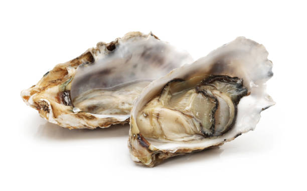 seafood: oyster isolated on white background - oyster stock pictures, royalty-free photos & images