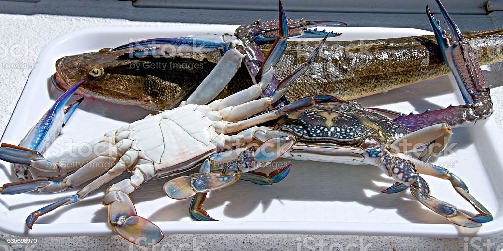 Seafood Ready to Cook. royalty-free stock photo