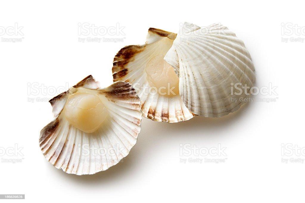 Seafood: Scallops stock photo