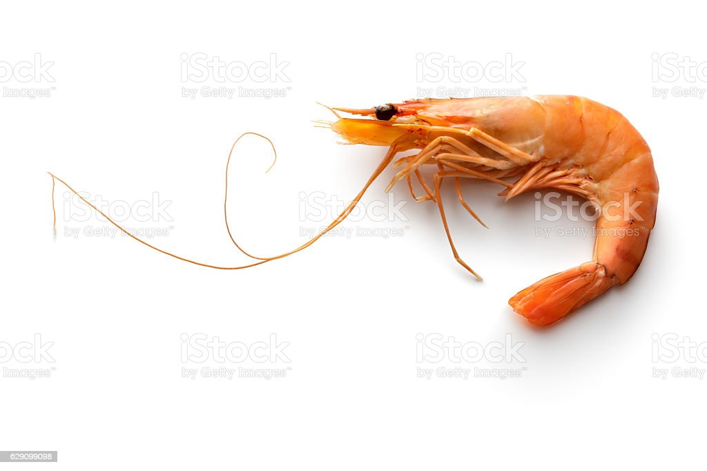 Seafood: Shrimp Isolated on White Background stock photo