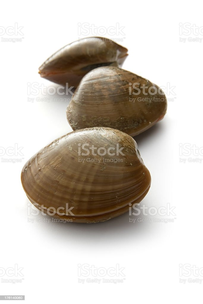 Seafood: Smooth Clam royalty-free stock photo