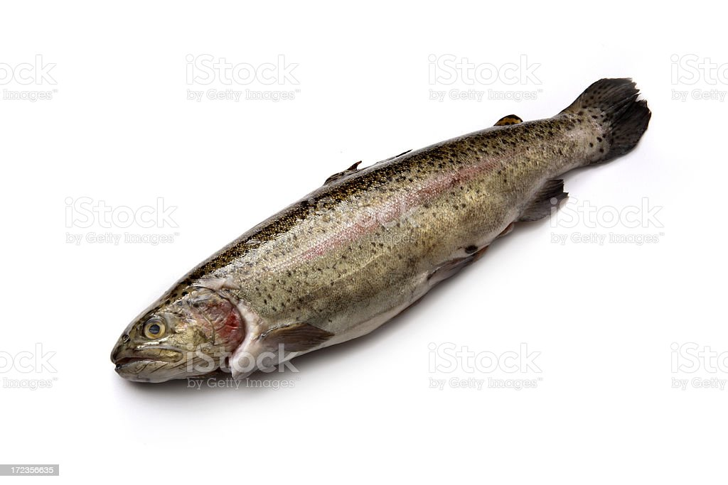 Seafood: Trout royalty-free stock photo