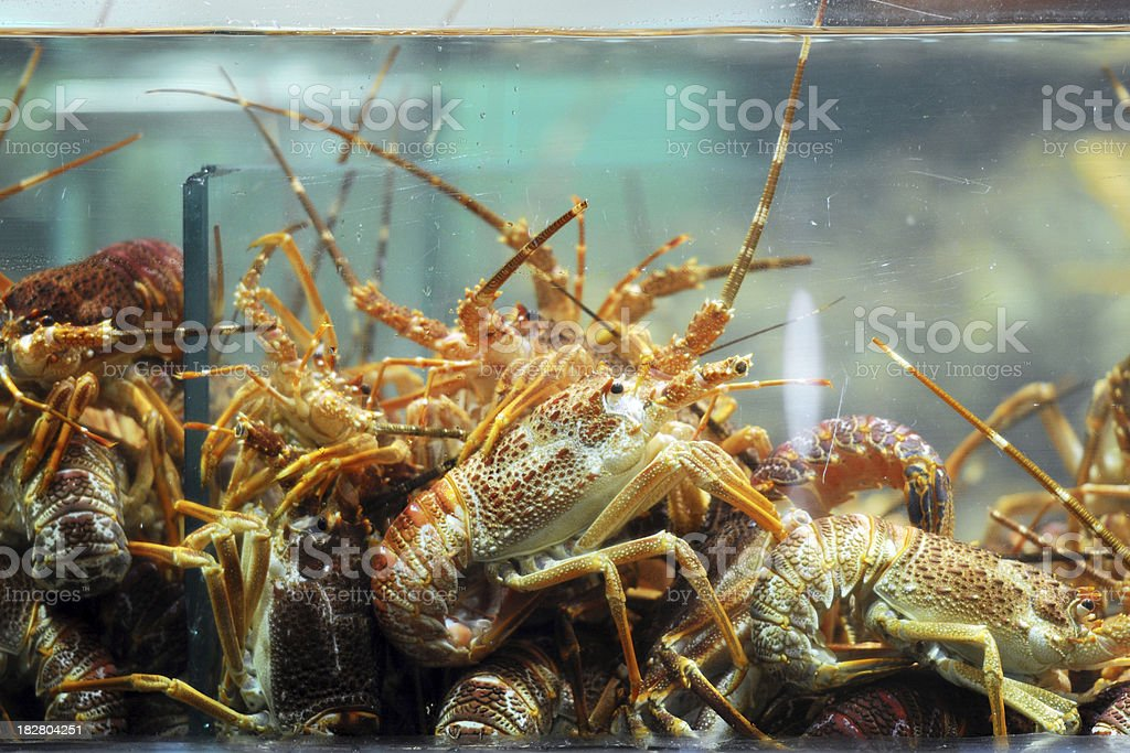 Seafood - XLarge royalty-free stock photo