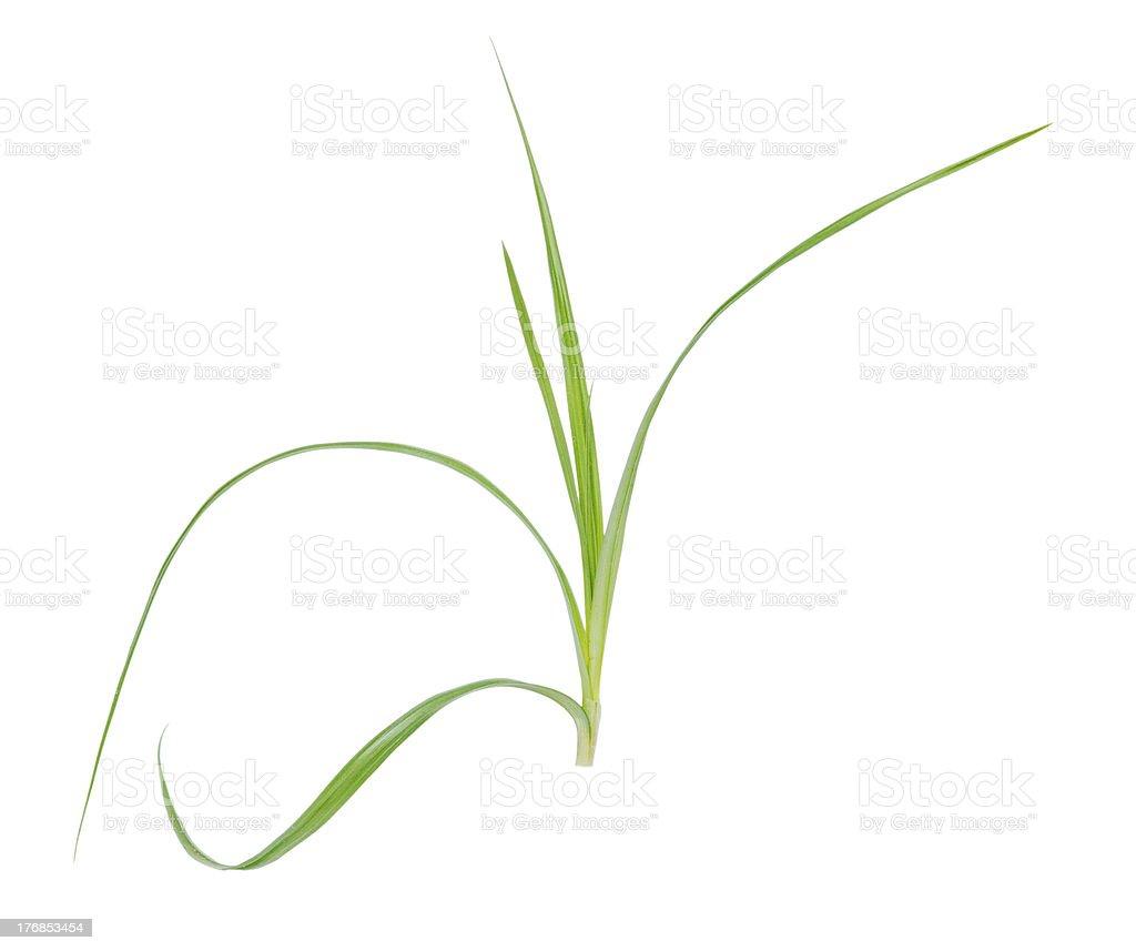 Seage plant stock photo