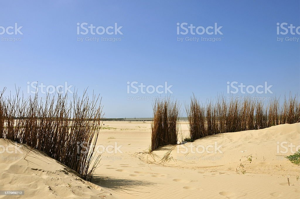 Seagrass and sand dunes, Image taken in Zeeland, Holland stock photo