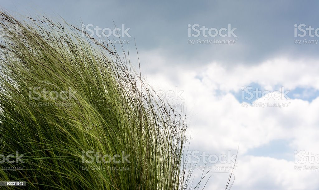 Seagrass with clouds royalty-free stock photo