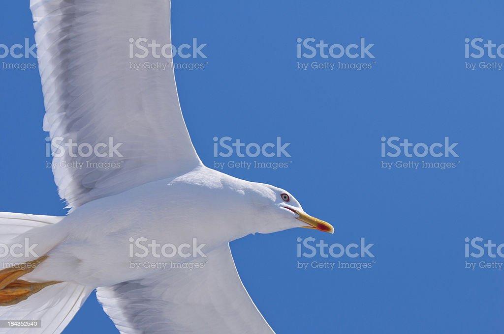 Seagul above stock photo