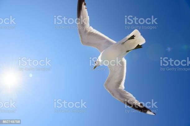 Seagull against blue sky free as a bird picture id852749758?b=1&k=6&m=852749758&s=612x612&h=cmtga1gloyxk6txvjzijfxnbbo4candvxmte7qaqmzo=
