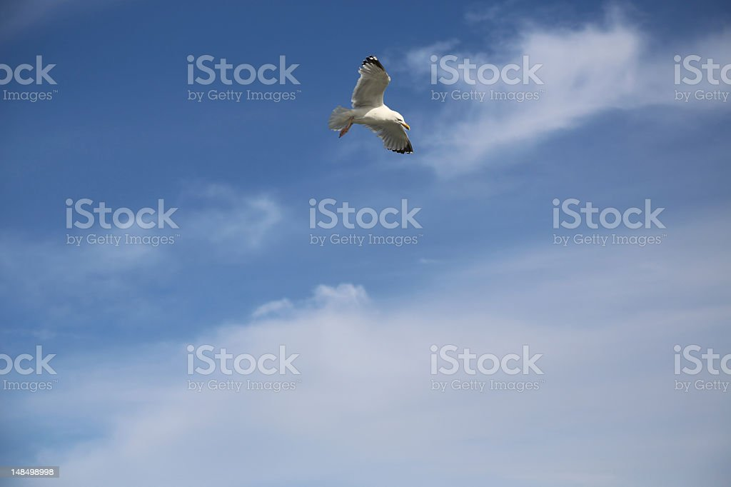 Seagull against the blue sky royalty-free stock photo