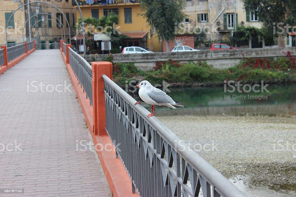 Seagull and Dove on a Bridge stock photo