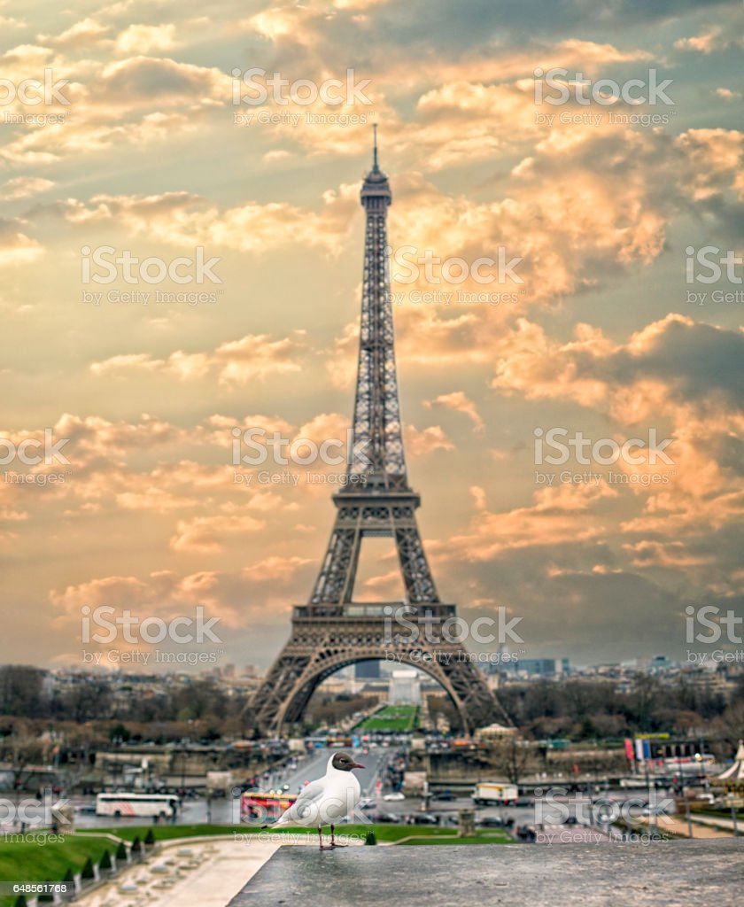 seagull and Eiffel Tower stock photo