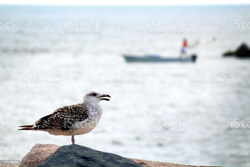 Seagull and fisherman stock photo