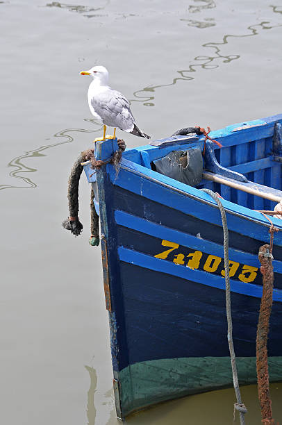 Seagull and fishing boat in the port of Esaouira - foto de stock