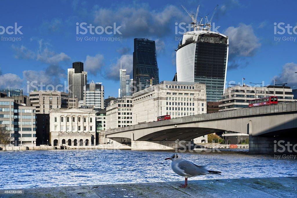 Seagull and London skyline stock photo