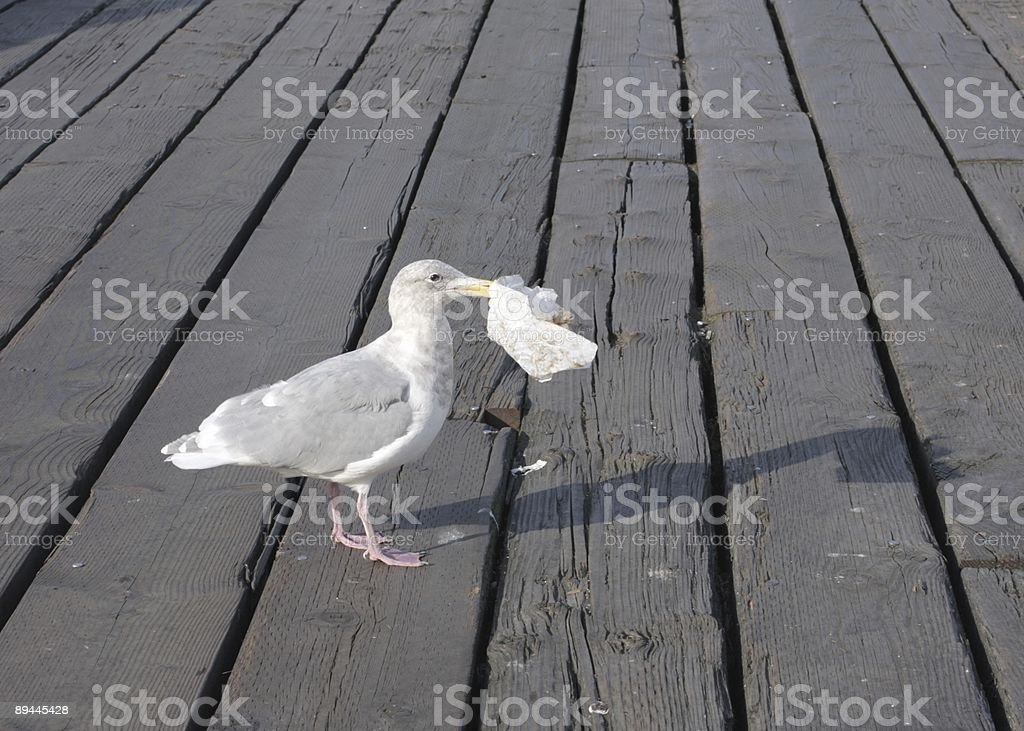 Seagull and Lunch in Vancouver, British Columbia, Canada royalty-free stock photo