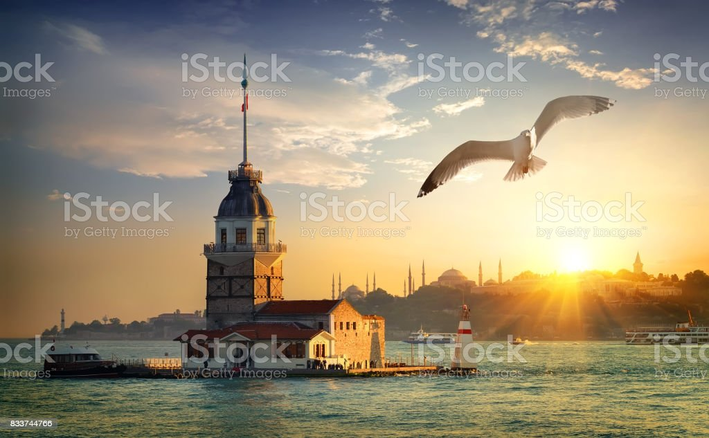 Seagull and Maiden Tower stock photo