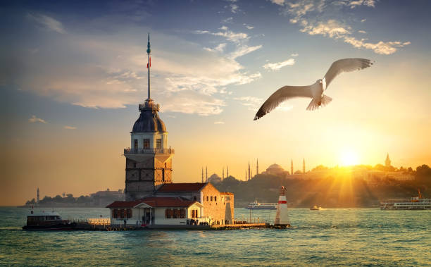 Seagull and Maiden Tower Seagull fliying near Maiden's Tower in Istanbul at sunset, Turkey bosphorus stock pictures, royalty-free photos & images