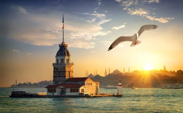 seagull and maiden tower - стамбул стоковые фото и изображения