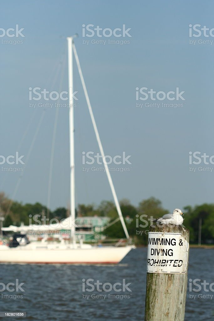 Seagull and sailing stock photo