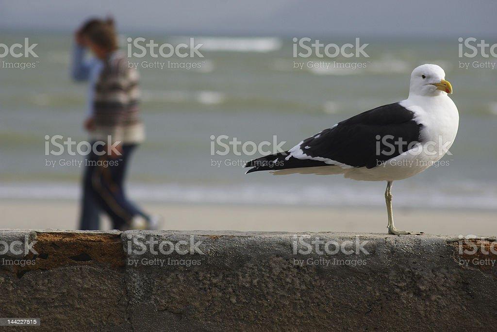 seagull at beach royalty-free stock photo