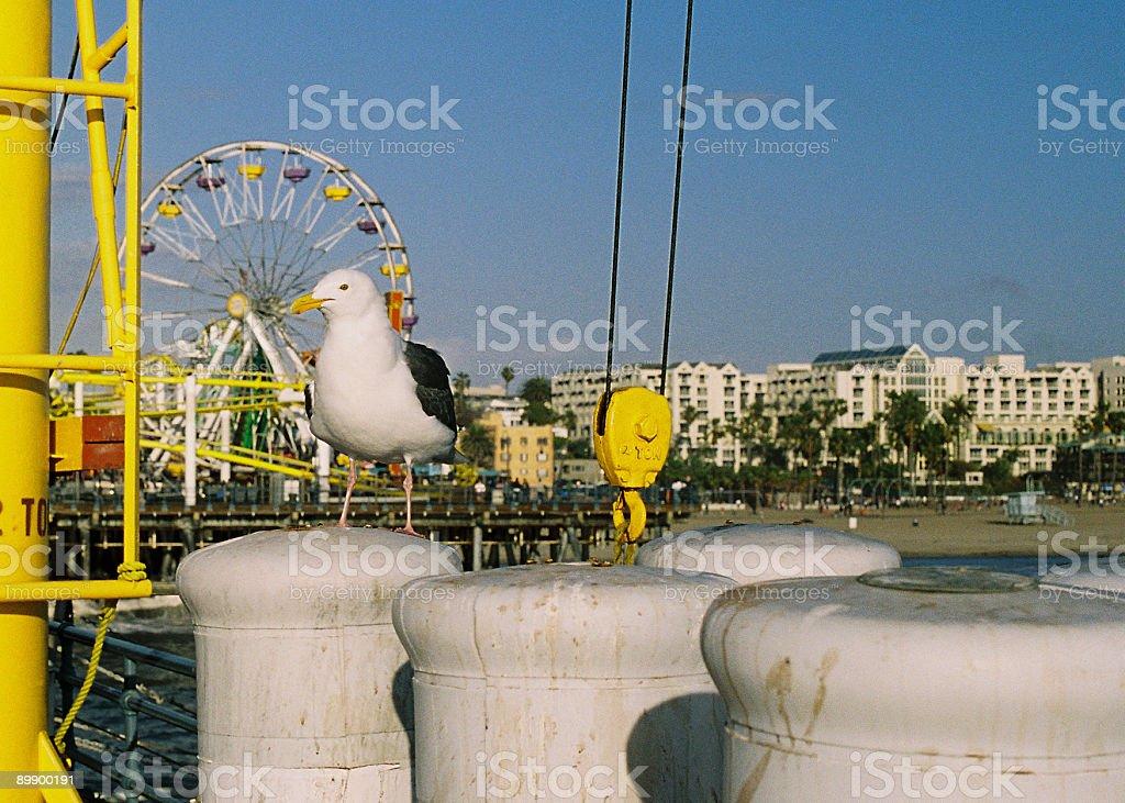 Seagull at Santa Monica California amusement park royalty-free stock photo