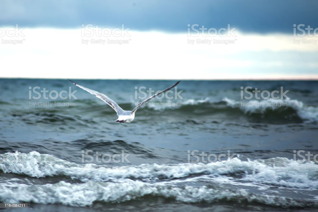 A seagull bird on the beach of the sea at sunset