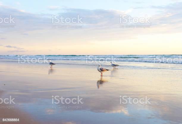 Photo of A seagull bird