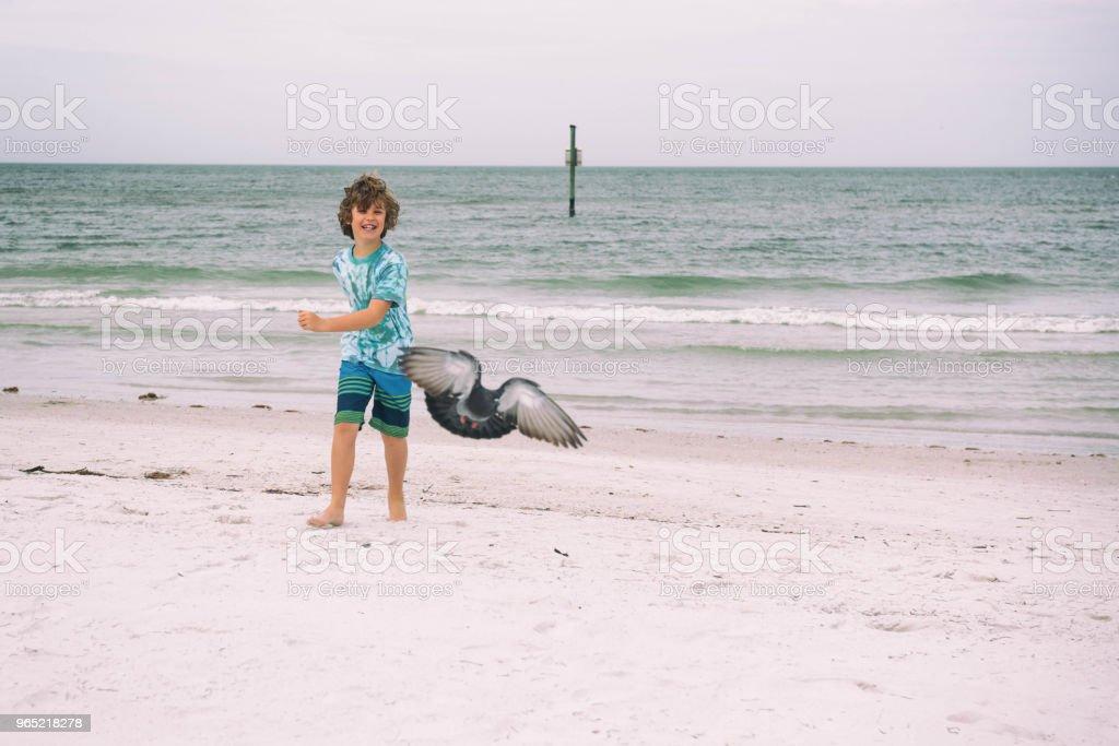 Seagull chasing zbiór zdjęć royalty-free