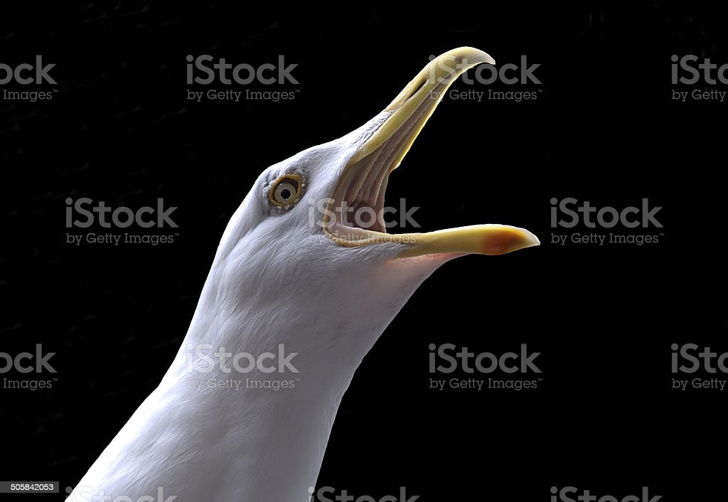 Seagull cry stock photo