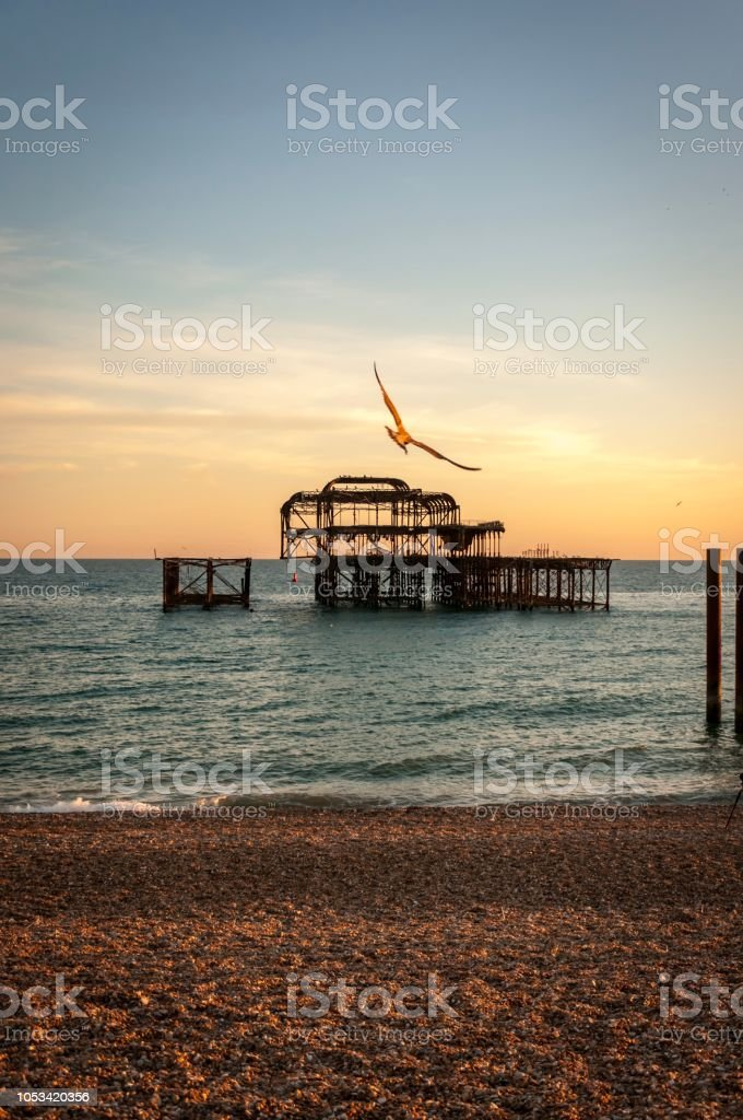 Seagull during sunset on the beach, Brighton, United Kingdom stock photo