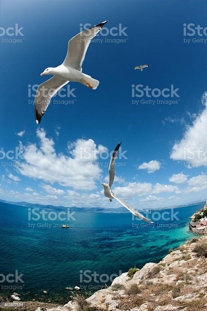 Seagull fliyng near the coast stock photo