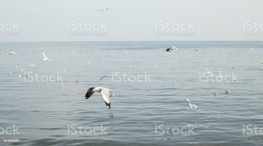 Seagull fly on a sea in the evening