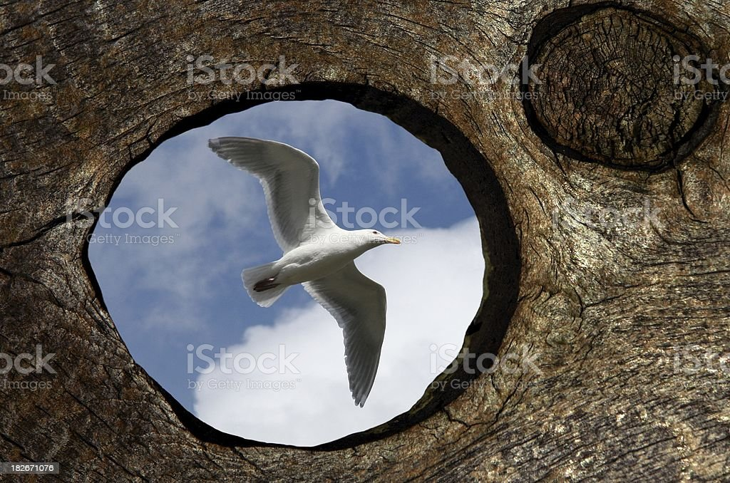 Seagull Flying By royalty-free stock photo