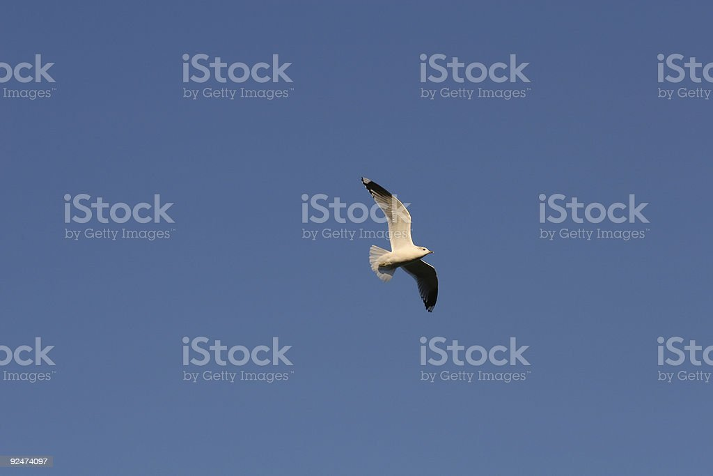 Sea-gull flying by royalty-free stock photo