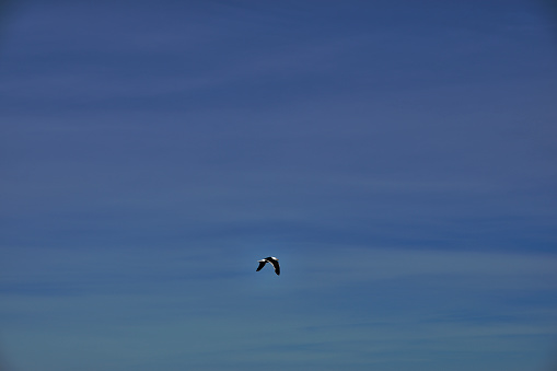 Seagull flying in freedom over the sea