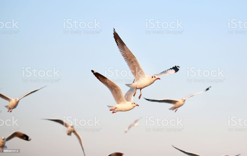 A seagull flying in sunlight. royalty free stockfoto