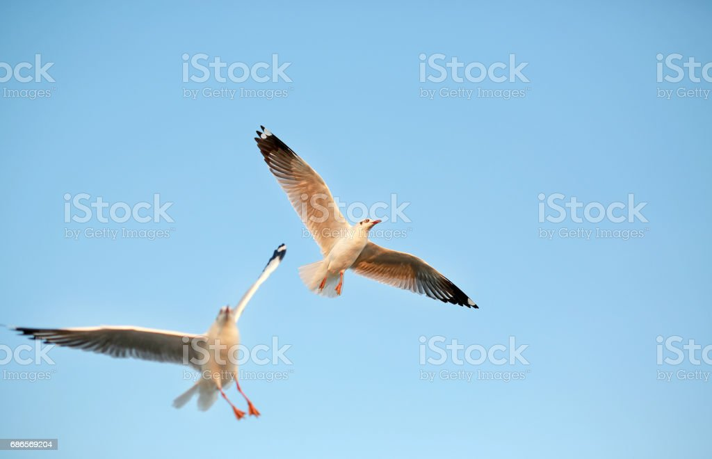 A seagull flying in the clear sky. royalty-free stock photo