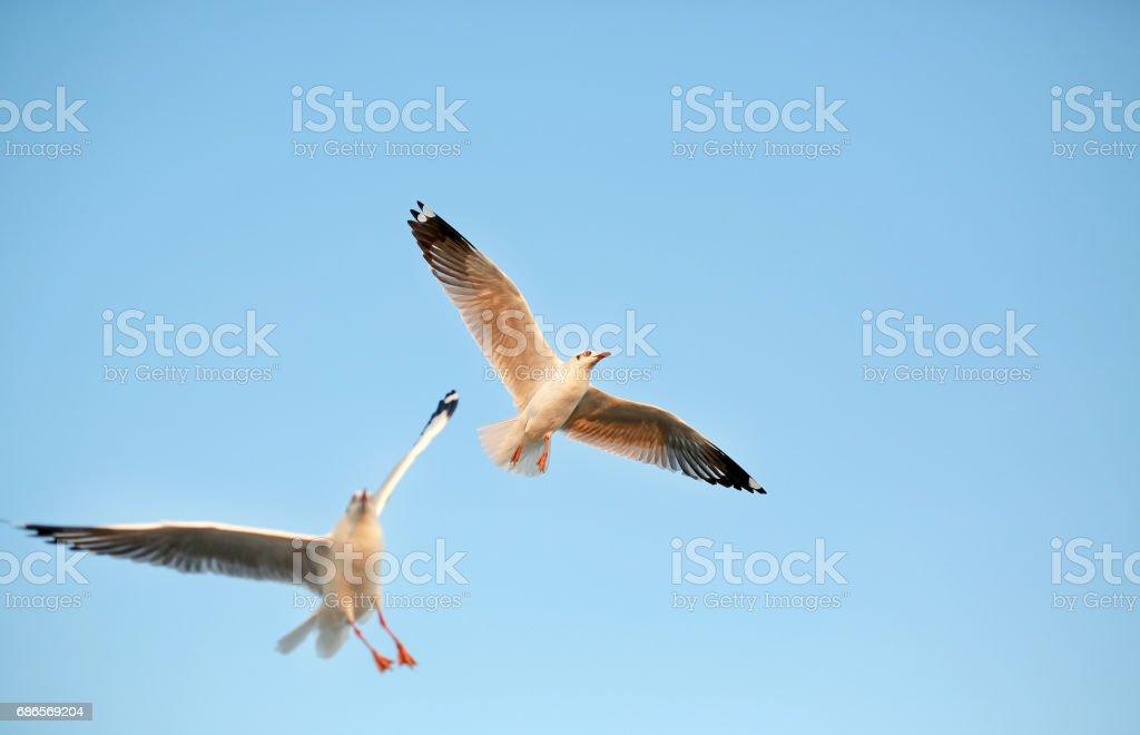 Une mouette vole dans le ciel clair. photo libre de droits