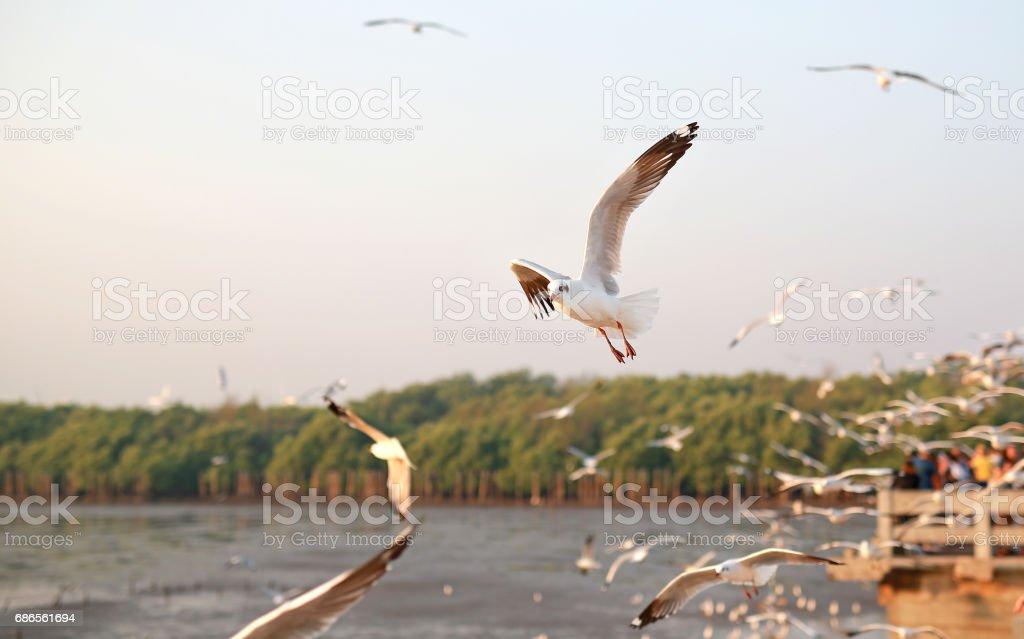 A seagull flying in the sky, All lit sunlight, Bright sunlight. ロイヤリティフリーストックフォト