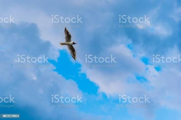 Foto de Gaivota Voando No Céu Com Nuvens e mais fotos de stock de Acima