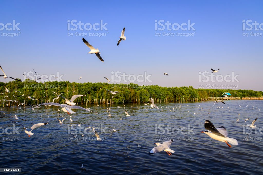 Seagull flying on the sea. royalty-free stock photo