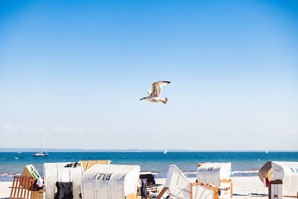 Möwe fliegen über Beach – Foto