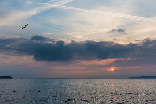 Seagull Flying over Lake Leman with Sunrise behind Clouds and Alps Mountains